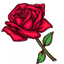 The elegant red rose is an expression of love and caring.