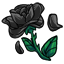 Dark as the night and dead, this was not a good day for this little rose :'<