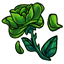 *sob* It was still so young *put dead green rose on the ground* it was still ripe