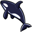 Also known as an orca, the killer whale has very distinct markings that distinguish it from other whales.