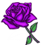 The spectacular purple rose is almost mystical in nature.