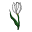 A tulip, a sign of spring.